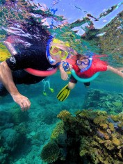 Snorkeling at the Great Barrier Reef ...