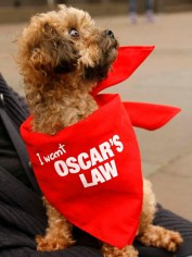 Oscar wants Oscar's Law